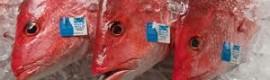 Seafood Fraud1